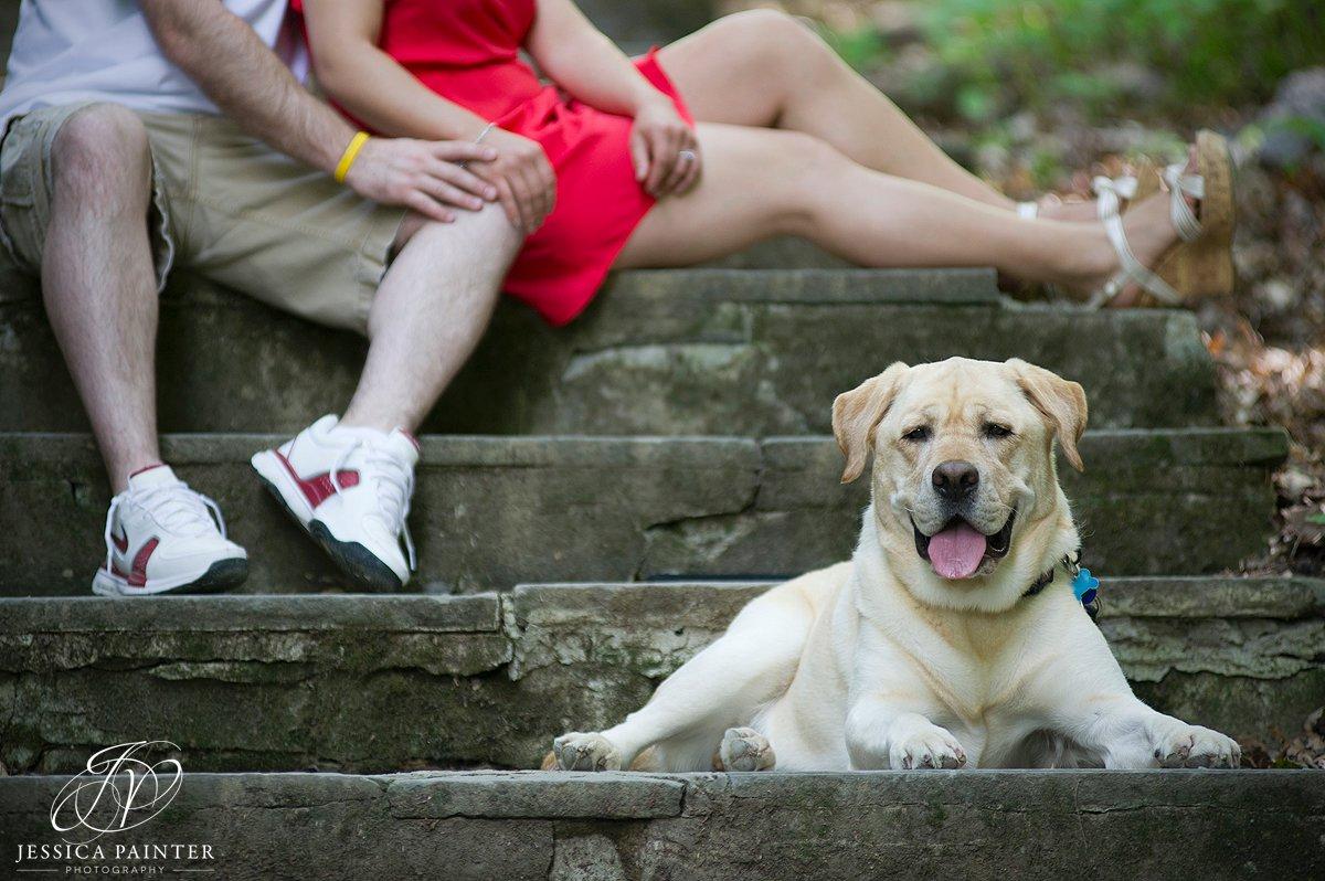 albany pet photographer, dog photo, labrador photo, Albany engagement photographer, john boyd thacher state park, engagement photo, on location photo, location photography