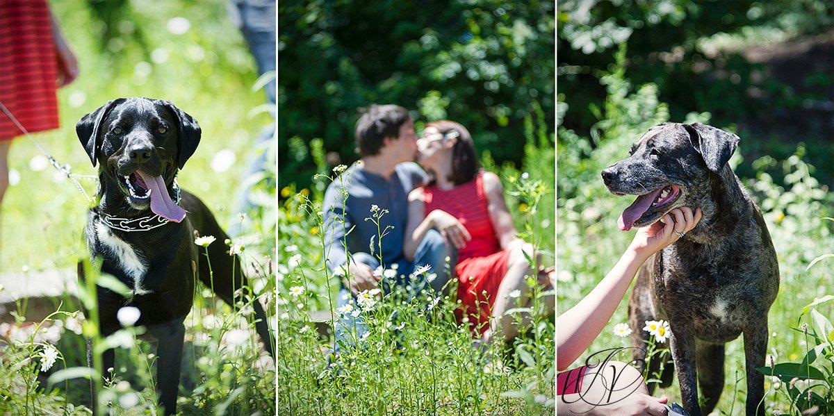 albany pets and engagement photo, saratoga pet and engagement photo, natural engagement photo, outdoors engagement session, alabnay engagement photographer, saratoga engagement